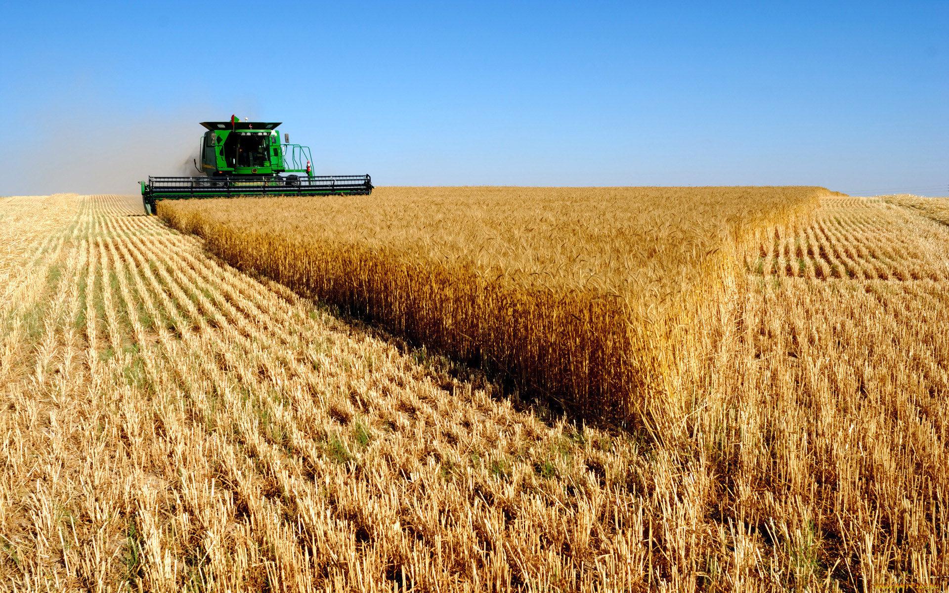 Алтайская сельскохозяйственная компания официальный сайт компания лагуна официальный сайт