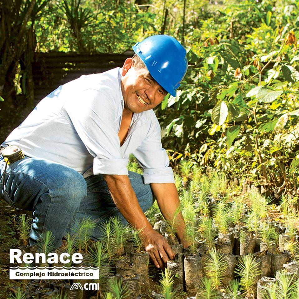 Renace ha pasado de la reforestación a la restauración ecológica con especies nativas, con las que ha logrado, a la fecha, la restauración de más de 317 hectáreas. #CompromisoAmbiental https://t.co/I8YqV9RpOW