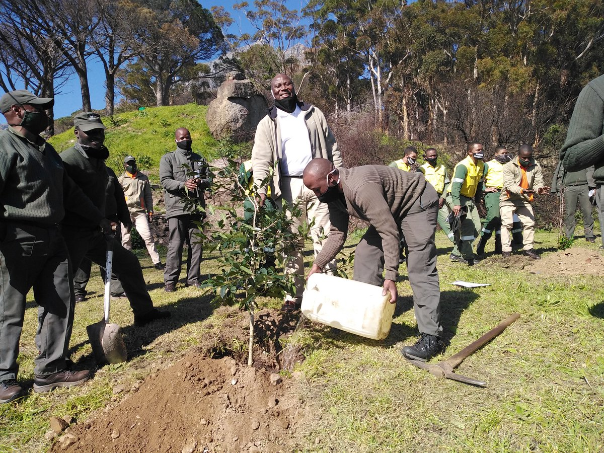 #worldrangerday2020  As part of the World Ranger Day celebrations, the Tourism Monitors, NCC Firefighters and TMNP rangers planted trees next to the Table Mountain National Park - Kloofnek Information Centre.   #SANParks #LiveYourWild #Rangers https://t.co/bqQY9y1bkz