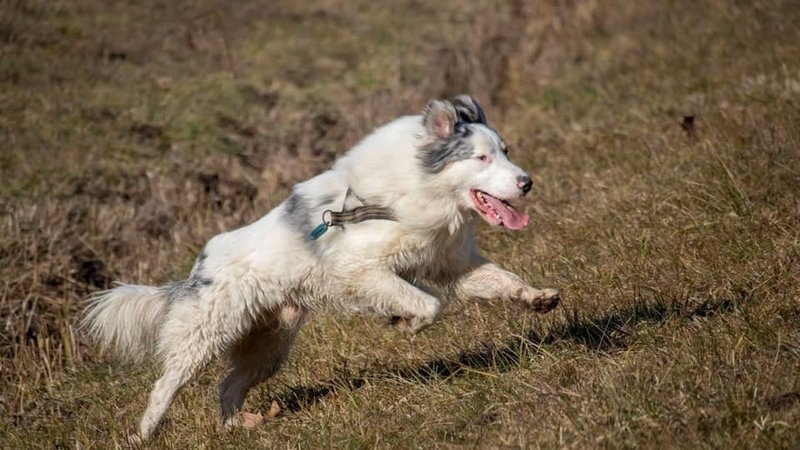 """Sturn, cane da compagnia, è stato fatto sopprimere perché """"abbaiava troppo"""". Questa pratica è legale nel Canton Ticino, in Svizzera, dove si può praticare l'eutanasia su un animale da compagnia perfettamente sano. Lidia non ci sta.  ✍️ https://t.co/oXpIX50YWJ https://t.co/1ZRvUs5PNk"""