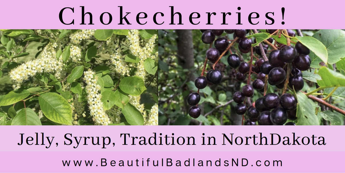 Chokecherries! Many people love them. But some people hate them! Their astringent taste is their trademark! Plentiful in North Dakota, in fact, they are the official State Fruit. Great recipes and history here! https://t.co/acu8dBPHUA   #jelly #berries #chokecherry #NorthDakota https://t.co/hg0C8W871E