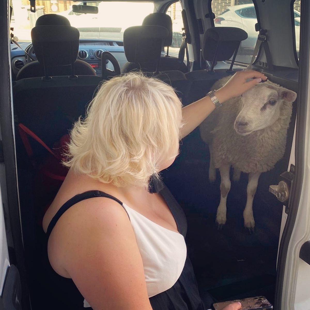 ☑️ En ce jour de «fête» de #AidElKebir, je suis fière d'avoir sauver ce mouton et pu éviter, à au moins l'un d'entre eux, de finir égorgé dans une baignoire !  Le mépris des lois des propriétaires en dit long sur leur respect de la France et de ses valeurs https://t.co/bBOKGNU2xl