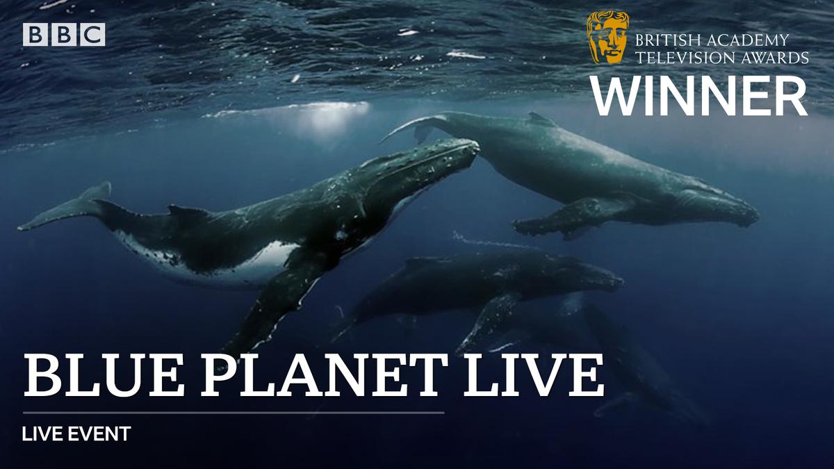 🐳 Congratulations to #BluePlanetLive on the #BAFTATV Live Event award!