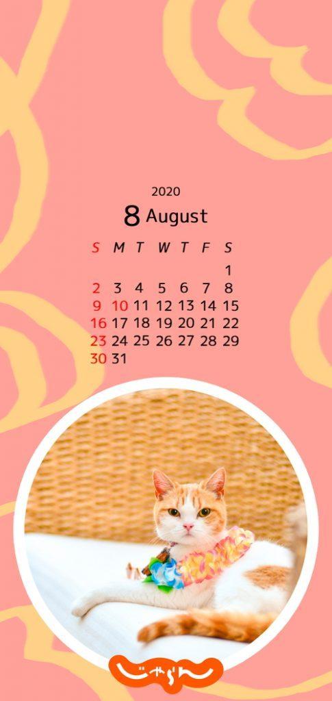 \\今日から8⃣月//  にゃらんの8月カレンダーと壁紙をこちらに置いておきますね( *・ω・)⊃旦 スッ  天候が不安定な日が続きますが、にゃらんのリラックスした写真で少しでもみなさまが癒されますように😽💕  #にゃらん https://t.co/mqVvz7DQFv
