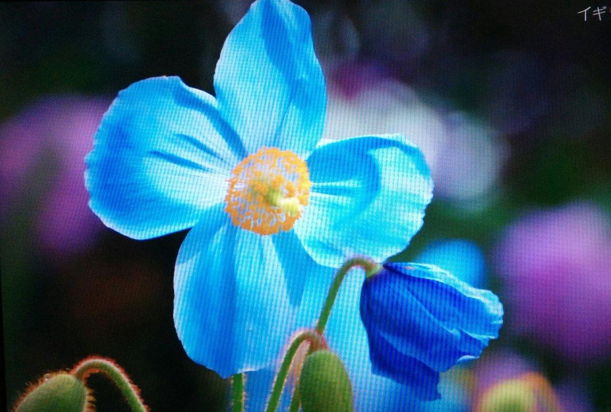 一 番 で 美しい 庭 イギリス