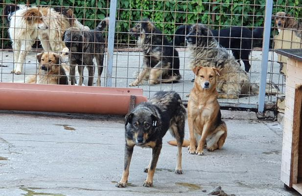 Help #SaveALife today  #Bosnia #bosnian dog rescue needs help to feed 114 dogs Let's raise 2,200 kg of kibble for #dogs doing it tough. Click or #donate kg of kibble. Thank you #dogsinlockdown #KindnessMatters #helpinghand #DogsofTwittter  https://www.animalwebaction.com/en/collectes/7762/croquettes-urgence-fourriere-114-chiens-bosnie-humans-for-them/…pic.twitter.com/E5nmEgz3DM