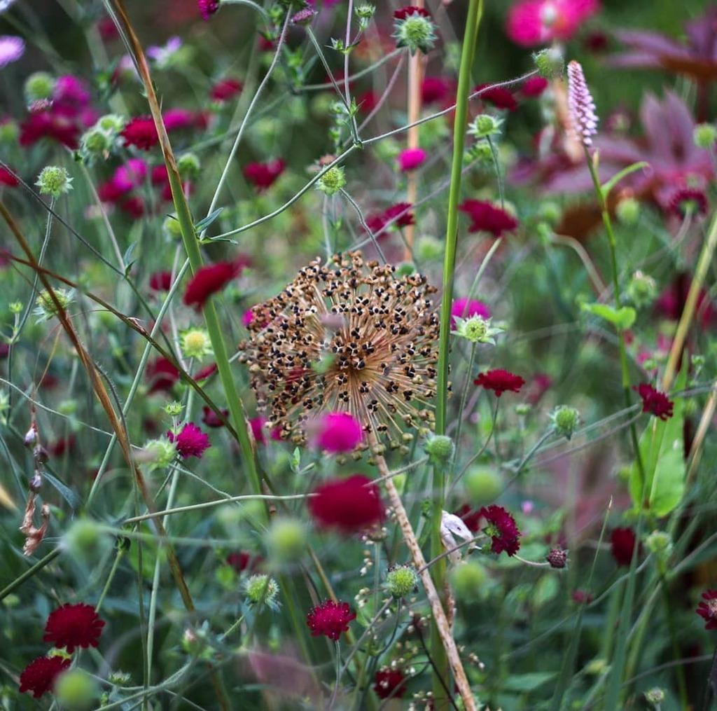 Summer assortment. . . . #winterbournehg #winterbourne #garden #flowers #flowerlovers #floweroftheday #flowerstagram #nature #naturelovers #dof #raw_depthoffield #dof_brilliance #explore_dof #dofnature #allium #weallshootphotos #westmidsphotocollective #… https://instagr.am/p/CDV4U40DgbT/pic.twitter.com/t1huGo63wA