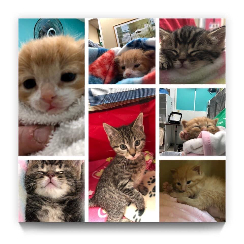 Some of our youngest residents at Cat Angels... https://t.co/ttDJq9CNJU