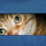 「何か用ですか?」隙間から覗く猫がぬいぐるみみたいで可愛い!