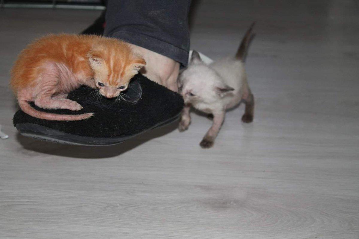 ¡Buenos días! Aquí nuestros ratoncitos ya están liandola 😋🐈♥️🐈 #Tindaya  #Parbat https://t.co/mlPQfCc2Oj