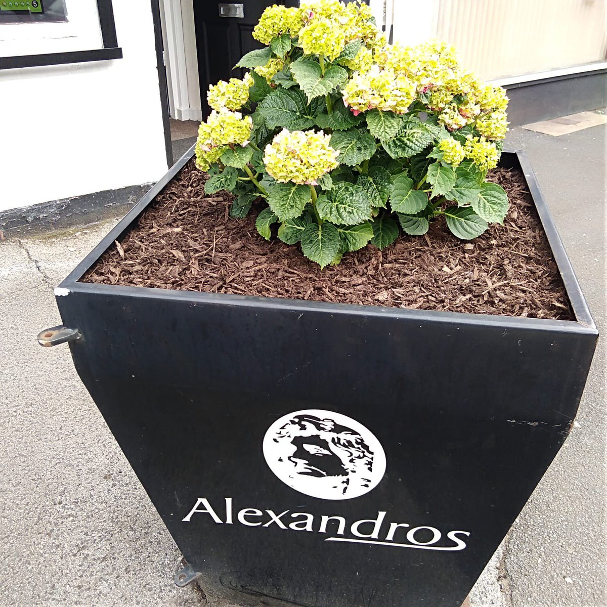 Always nice to see local businesses brighten up their premises with plants, these new ones at Alexandros look nice next to the plants from @MCCWythenshawe And we have a new bin.