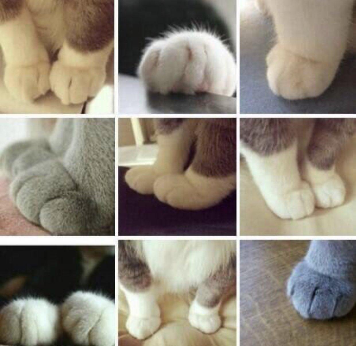 「猫の手も借りたい」って!? いやいや、猫のおててを侮ってはいけません!