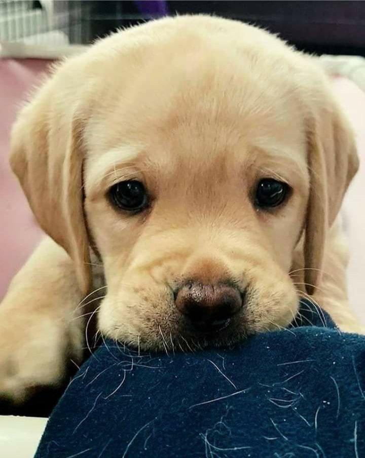#dogsofworld #dogsoftheday #dogdays #dogslovers #dogsofinstaworld #dogscorner #dogsworld #dogsarelife #dogsgram #cutedog #cutedogpics #cutedoggie #cutedogpic #cutedogphotos #cutedoggogram #mydogiscutest #dogsarefamily #dogsofinsta #picsdog #dogmodel #dogphotography #dogfriendlypic.twitter.com/UGYHSnbmvC