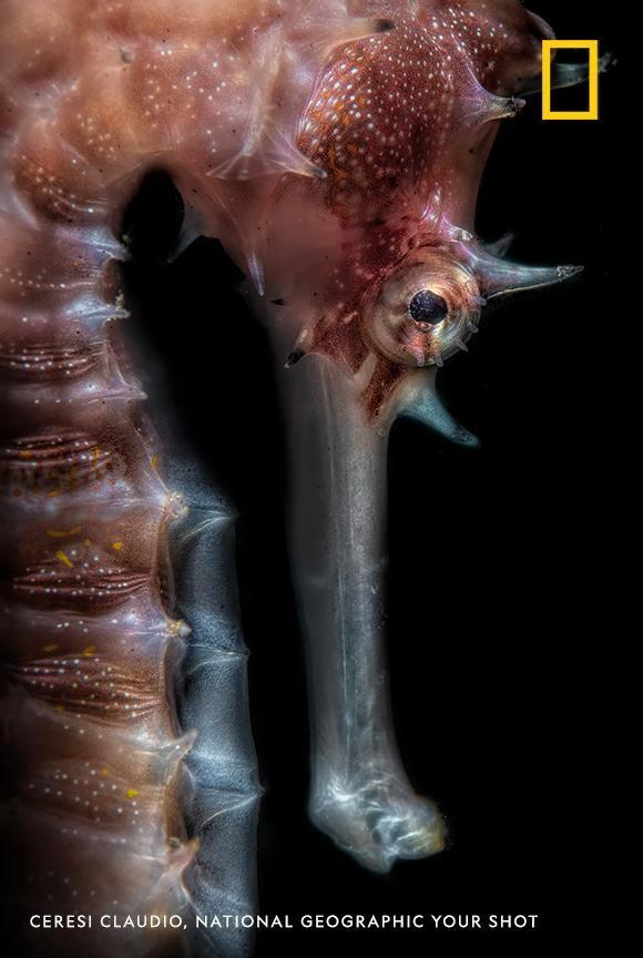 Have you ever seen a seahorse this close? Photographer Ceresi Claudio captured this incredible image in Bali, Indonesia https://t.co/qxFNfGF1Zm