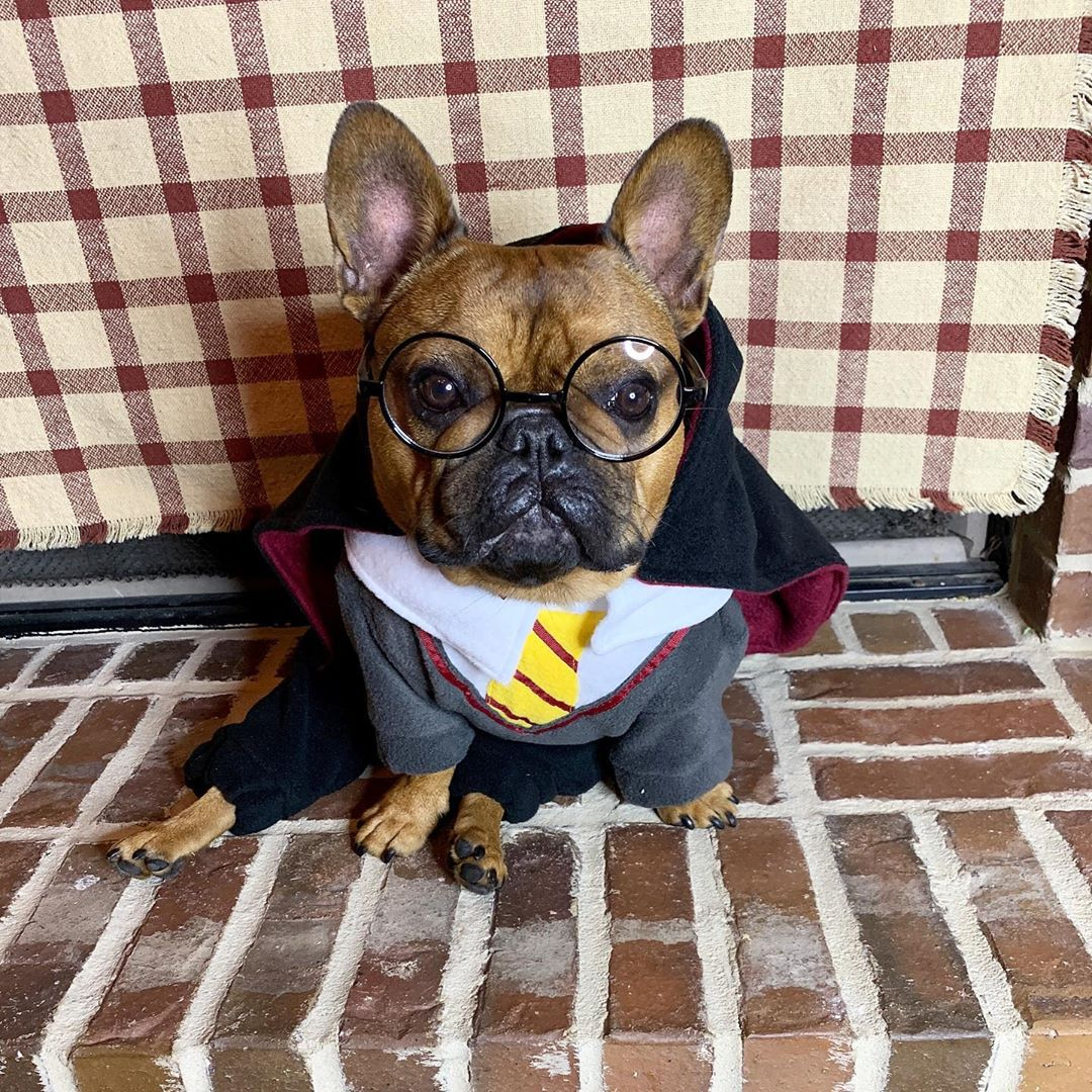 Happy Birthday, Harry Potter Who else is a big fan?