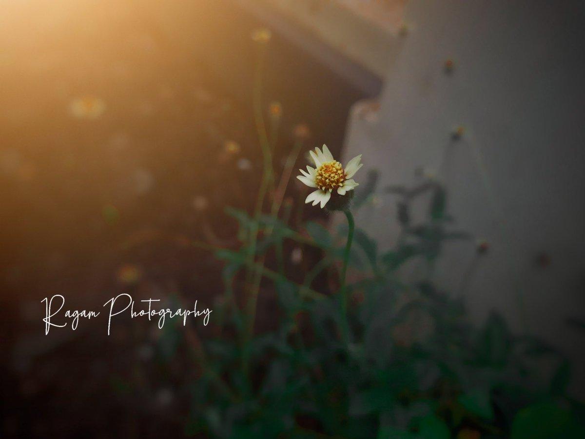 . . . . . . . . . #flowers #flowershop #flowers#flowerstagram #flowerslovers #flowersofinstagram #flowerstalking #flowerstattoo #flowersphotography #photography#photographylover #photographylovers #photographyislife #photographysoulspic.twitter.com/lcpMJVyQnR