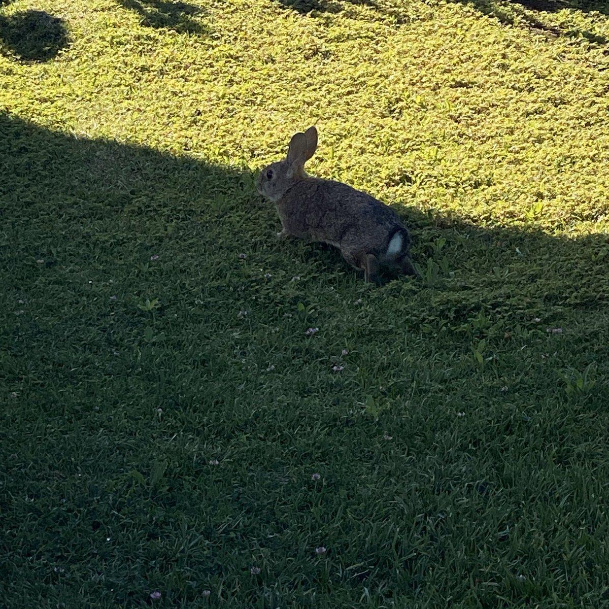 @lilnasxfp sorry i'm late happy birthday my love 🤍🤍🤍🤍🤍🤍🤍🤍🤍 here's a cute rabbit i saw earlier she's for u