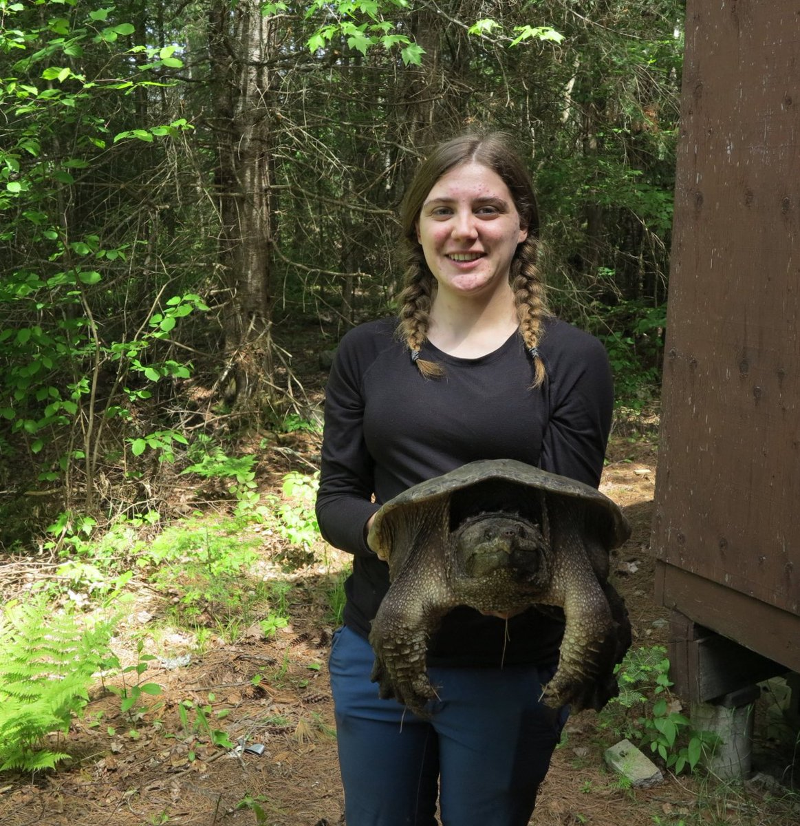 @CheloniaGirl @HerpLeague @ssarherps @IchsAndHerps I'm studying how climate change is impacting aspects of snapping and painted turtle life history - focusing on offspring sex ratio and development right now 🐢🐢 https://t.co/TyDsD1QI8I