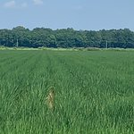 """Image for the Tweet beginning: Twin 38"""" row rice about"""