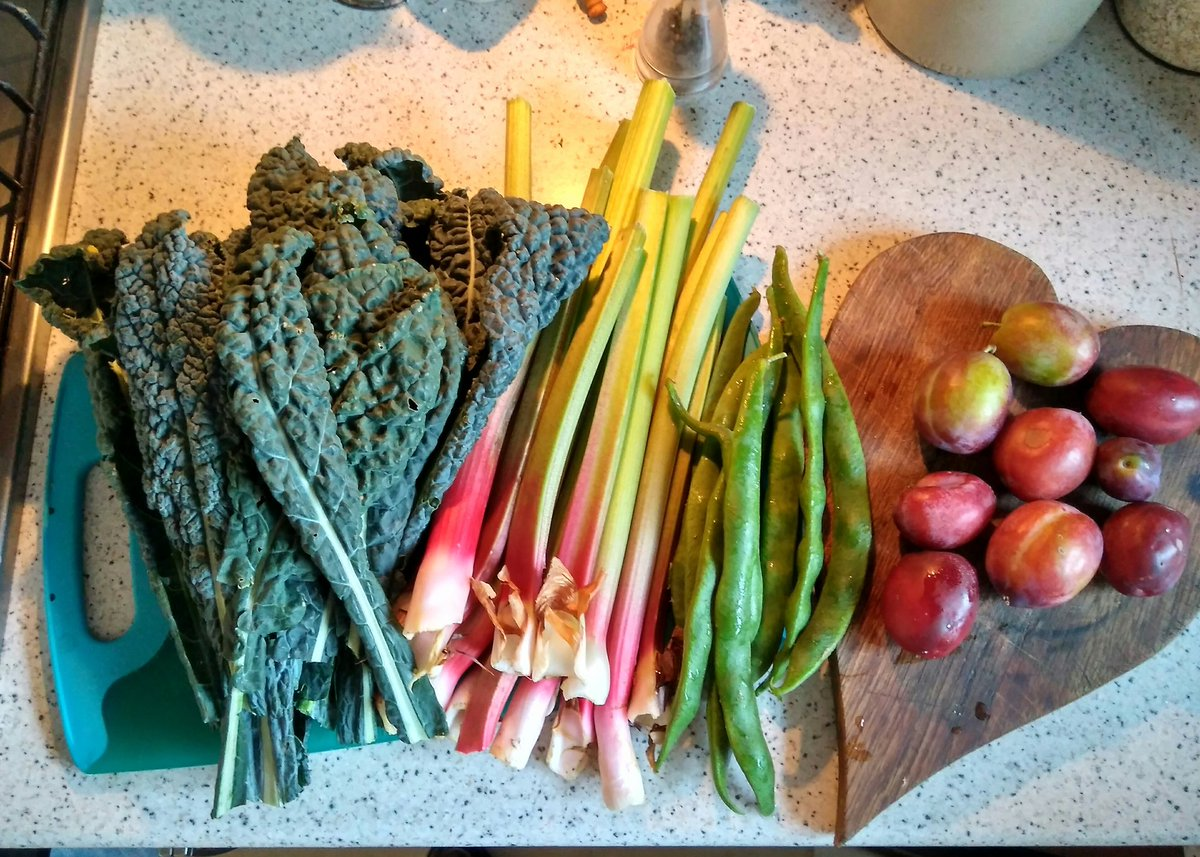 Growing your own produce in an allotment has lots of benefits - but the best is when you bring it home to eat! Kale and runner beans were grown from seed during #lockdown pic.twitter.com/WURJhBwQ5z