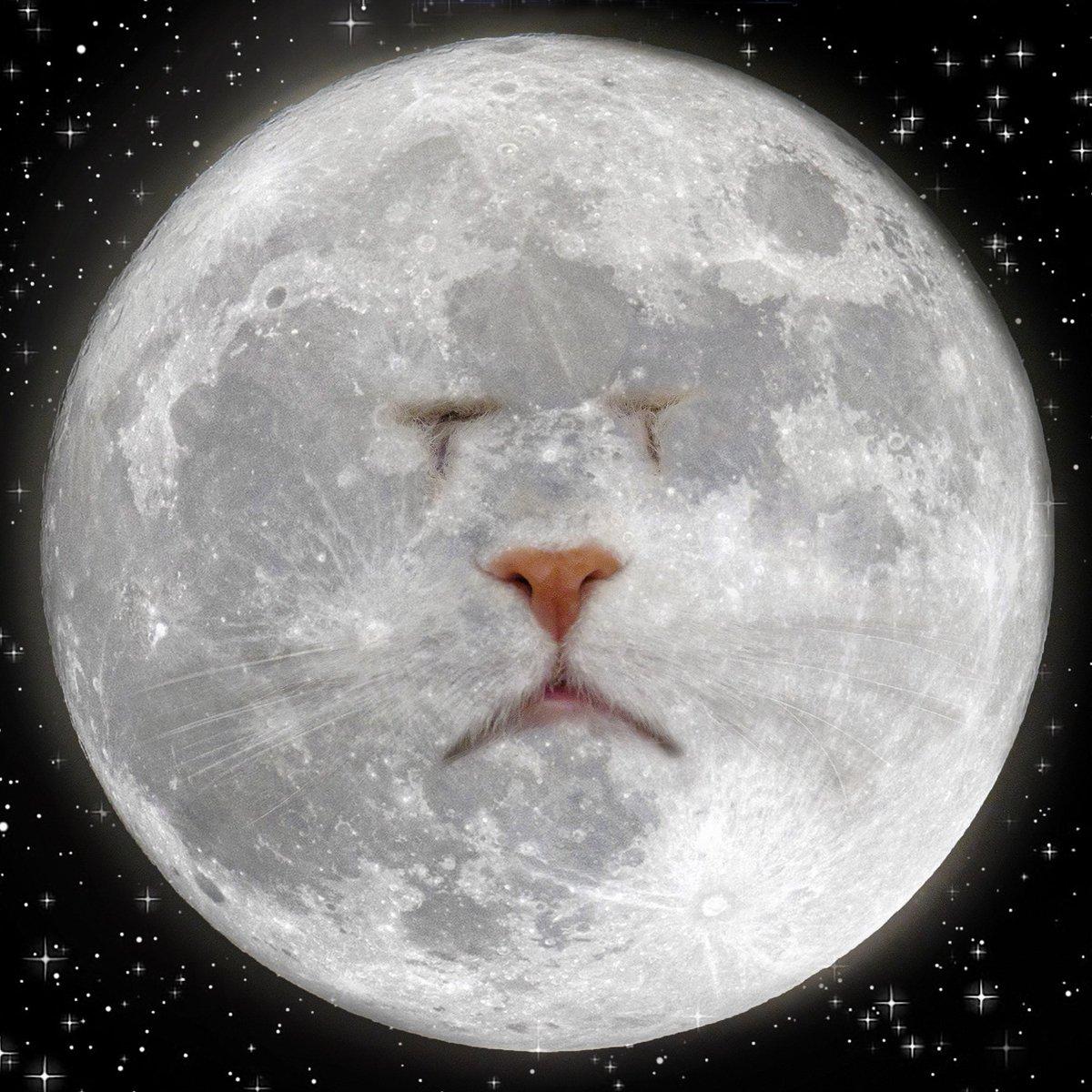 Moet in the moon 🌚 Happy Sunday funday!  #sundayvibes #CatsOfTwitter #AnimalCrossingNewHorizons https://t.co/1FTmyd9Spb