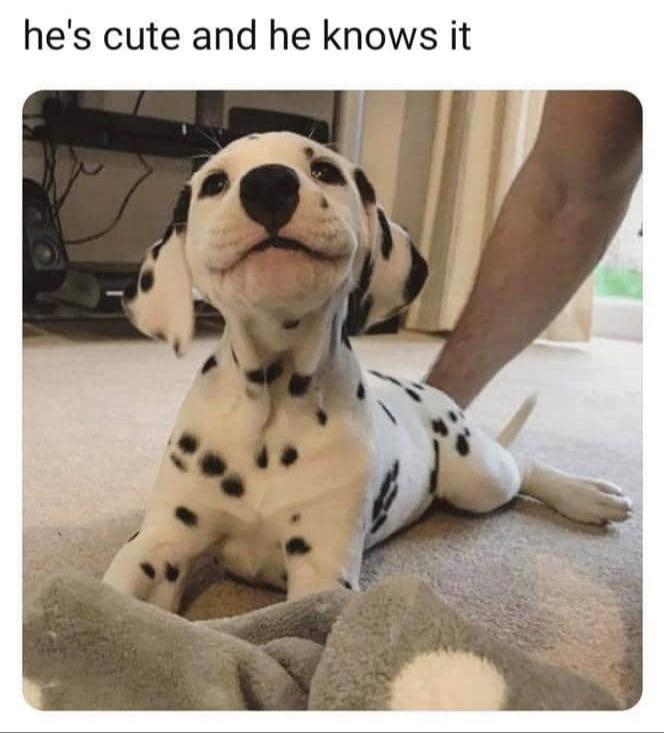 #dog #whiteandblackdog #whitedog #blackdog #dogstagram #dogslife #dogsofinstagram #dogstyle #dogsofworld #dogsoftheday #dogdays #dogslovers #dogsofinstaworld #dogscorner #dogsworld #petgoodie #dogsarelife #dogsgram #cutedog  #cutedoggie #cutedoggogram #mydogiscutestpic.twitter.com/EGs3DnvwcU