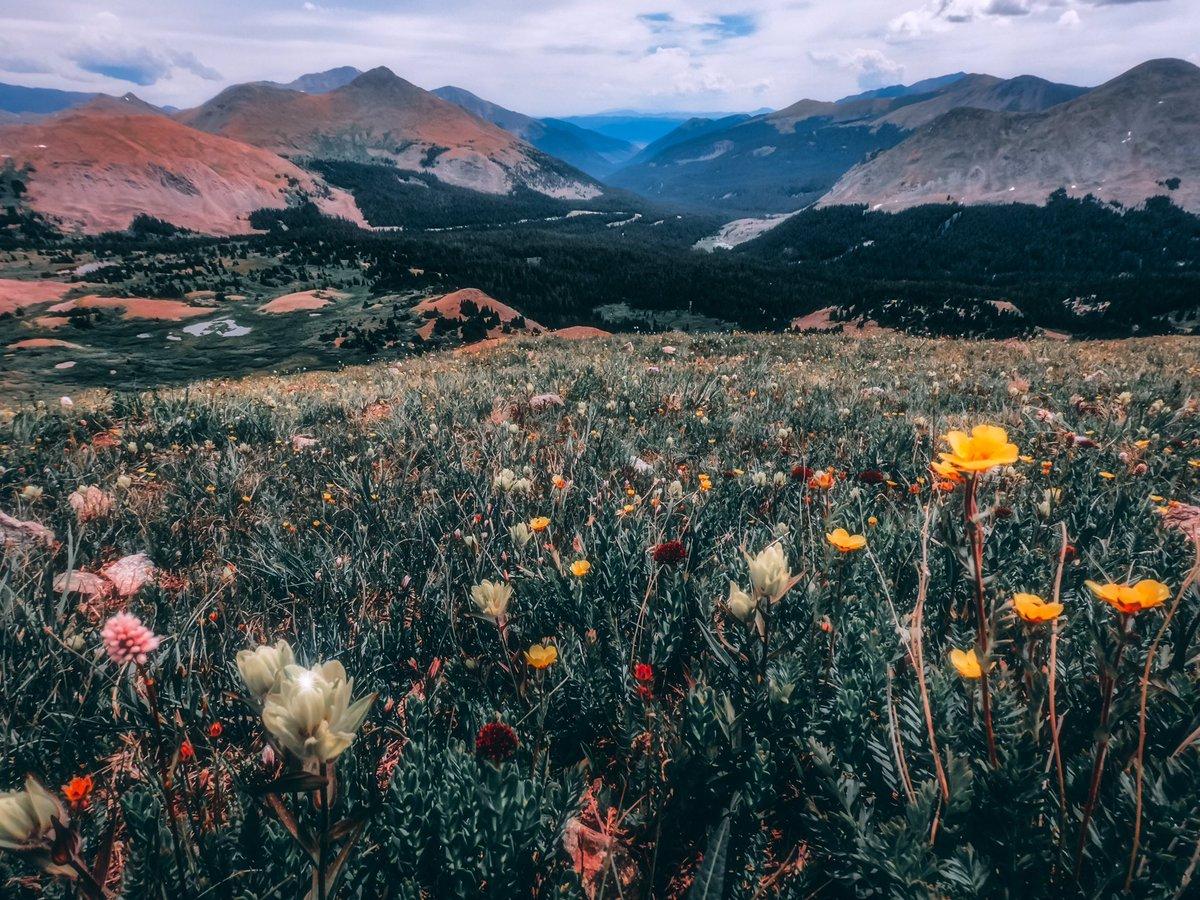 #coloradountamed #ColoradoLive   #colorado_travel #colorado_creative #viewcolorado #naturalcolorado #outtherecolorado #ColoradoShared #TheColoradoTrail #bravethecdt  #MTNfolk #TourThePlanet #WeLiveToExplore #destinationearth #TravelAwesome #TheGlobeWanderer #awesome_earthpixpic.twitter.com/CCScyoYtxx