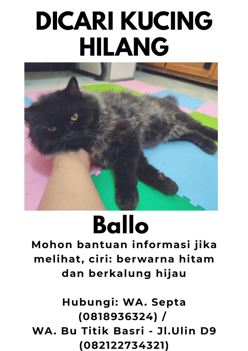 Nama Kucing Jantan Kelabu 81021 Nama Untuk Kucing Comel Lucu Dan Unik