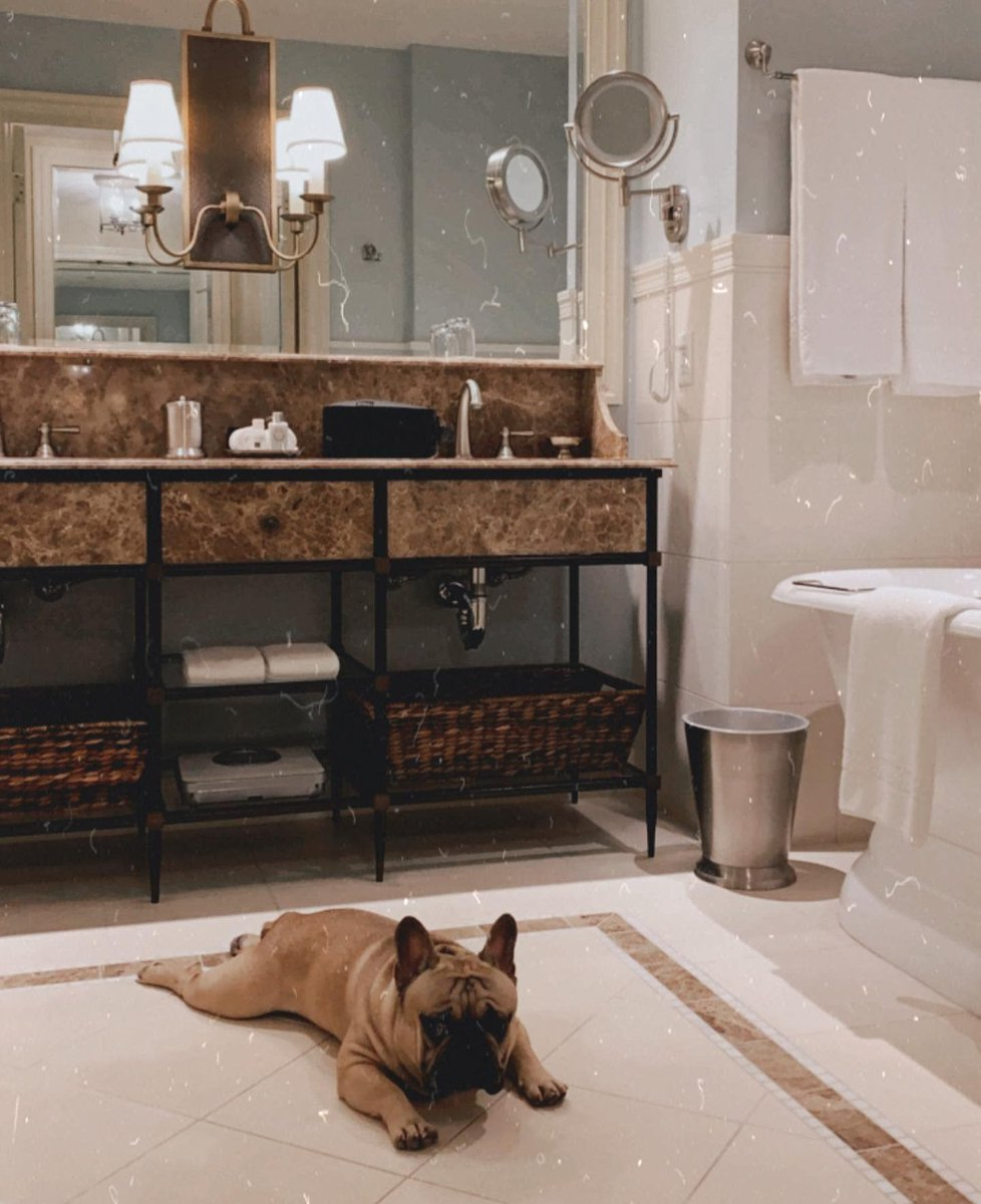 Marble floors > summer heat. #DogsofSalamander   (IG: kimchi_thefrenchie) #frenchie #frenchbulldog #dogfriendly #dogfriendlyhotel #dogtraveler https://t.co/hPf68coBAD