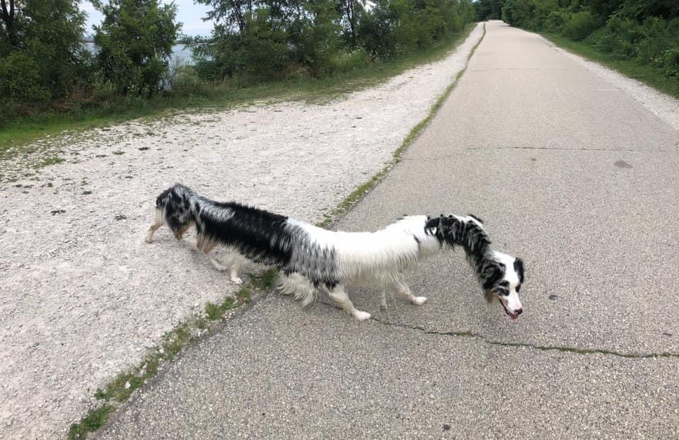 When your dog photobombs a panorama pic😂 📸 FB Kimberly Krohlow