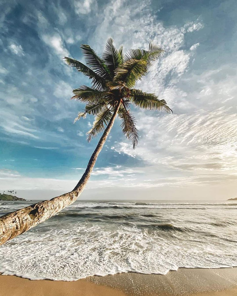 If you like Piña Coladas...meet us under the palm trees in Goa   cc: @anishdop  Follow us @goacoworking . . . . . . #palolem #india #goacoworking #indian #gramslayers #travel #travelblogger #shacks #travelphotography #travelgram #goa #гоа #beautifulgoa #goabeach #goadiariespic.twitter.com/wGAE5il5yM