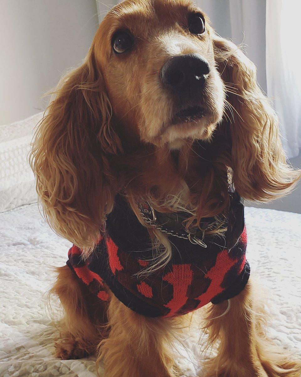 Anjos enviados a terra para nos ensinar o que é amor da forma mais pura e verdadeira, doar-se sem esperar nada em troca.    Teddy #Teddy #Inverno #Winter #Dog #Dogs #DogsLovers #4patas #TrueLove #AmorVerdadeiro #CockerSpaniel #Cocker #Look #MyLove #MyBaby #MyAngelpic.twitter.com/wLP77peOg5