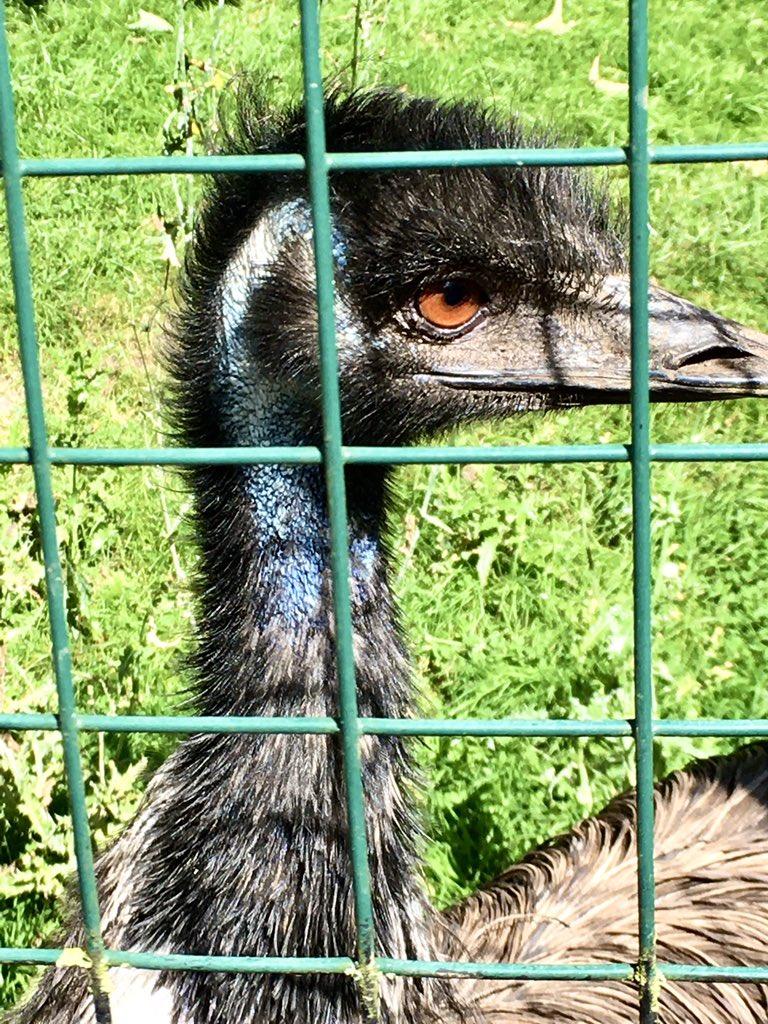 Birds,🌸🌼🌺& 🐝🐝🐝#LothertonHall #Leeds https://t.co/2Gn0x5cfBV