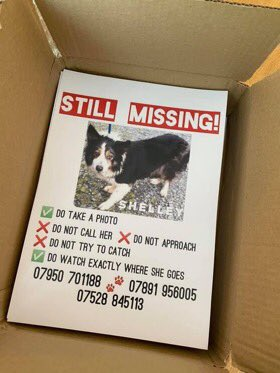 THERES A TWITTERSTORM HAPPENING NOW FOR #Bordercollie CALLED SHELLEY #findShelley  ‼️STILL MISSING SINCE APRIL‼️ Her family are getting really  worried....sightings possibly 😧💕 CAN U HELP BY KEEPING 👀 OPEN  She's missing from #MuchHadham area #Hertfordshire 🆘🆘🆘 https://t.co/Lp3MxAFH9J