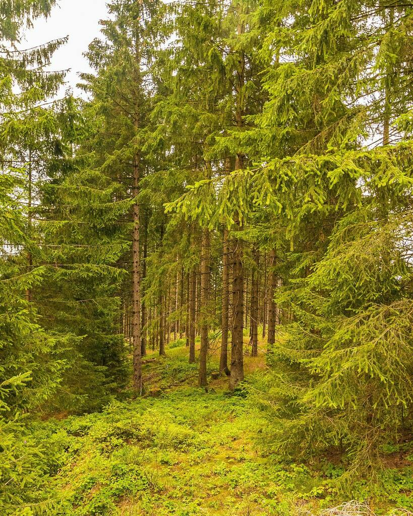 Trees are awesome! #exploringtheharz #beautifulharz . . . . . #getoutside #getoutstayout #exploremore #theglobewanderer #letsgosomewhere #welivetoexplore #landscape_lovers #EarthVisuals #modernoutdoorsman #thegreatoutdoors #keepitwild #homeiswhereyourhar… https://instagr.am/p/CDZjBOHoy3p/pic.twitter.com/ODRKctk6BH