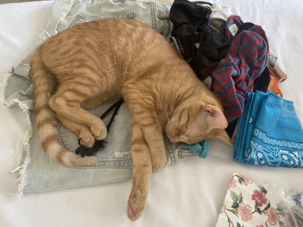 Slowly progressing to taking over Mommy's bed #catmom #instapet #meow #kittenpic.twitter.com/h3K74qV56v