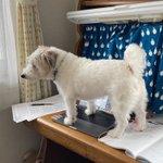 少し部屋を空けていたら…犬がレポートを書いてくれていた!
