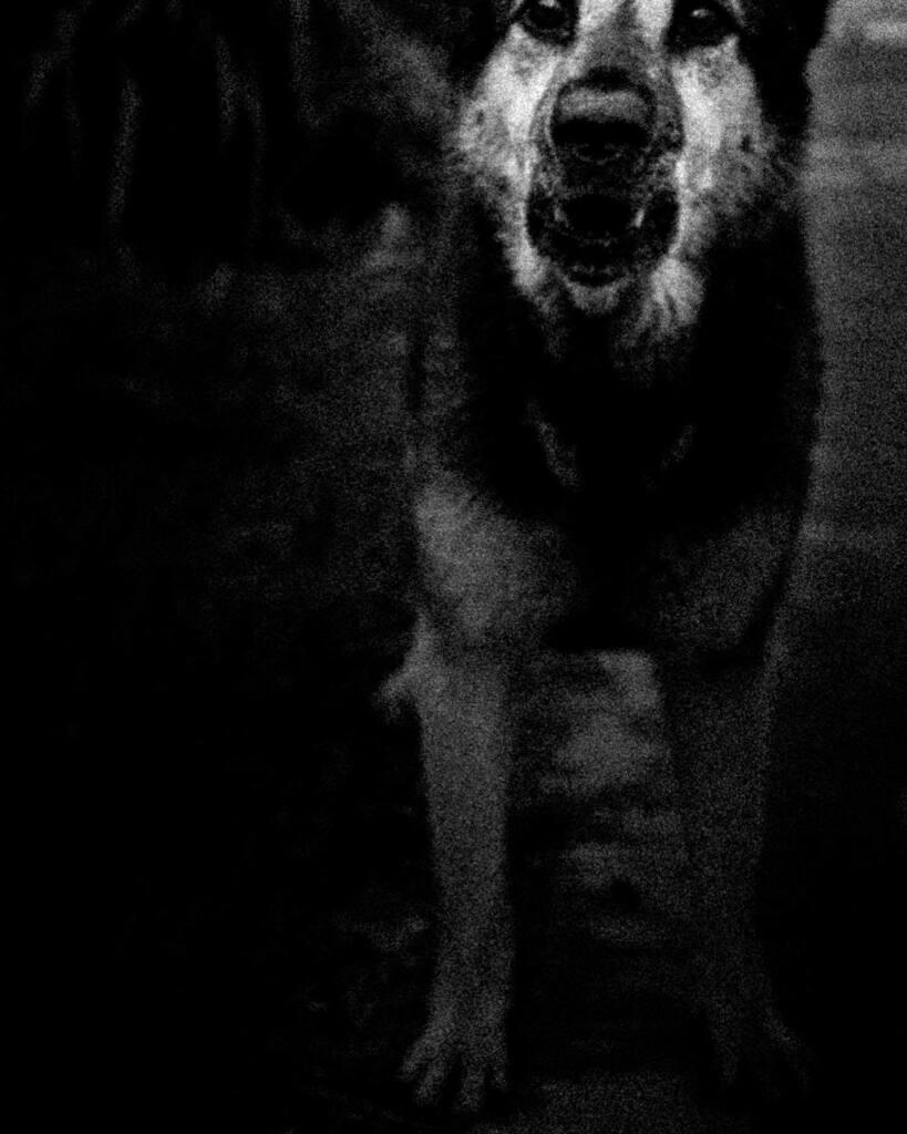 This fuckin dog bit me  © DickieSuzuki  . . . .  #art #artphotography #contemporaryartphotography #conceptualphotography #imagephotography #lightandshadowphotography #streetdetails #streetsnap #contemporaryart #contemporaryphotography #conceptualart… https://instagr.am/p/CDaZot2DA1e/pic.twitter.com/Zxaya3CR8K