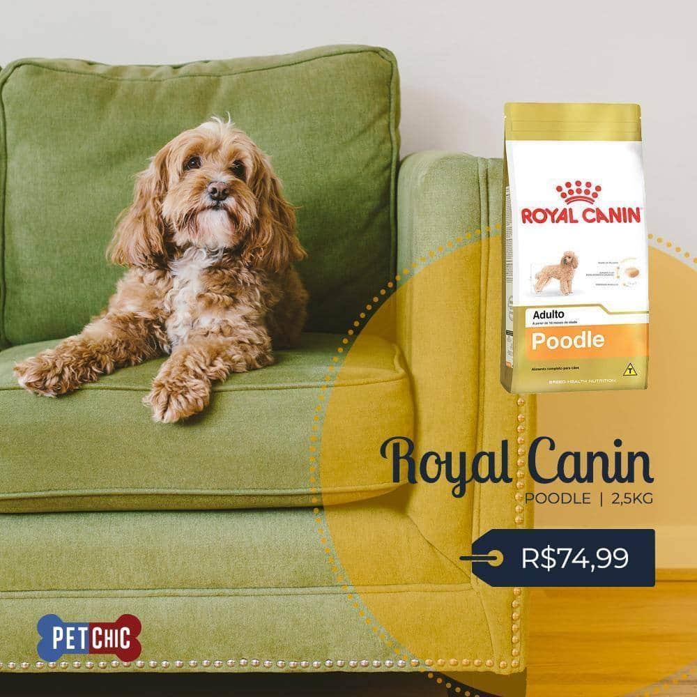 Na Pet Chic você encontra Royal Canin Poodle 2,5Kg por apenas R$74,99. Aproveite!  Tudo de melhor para o seu pet você encontra aqui!  Peça já: Américas: 99291-8292 | Bandeirantes: 99292-1367 | Bonsucesso: 99290-5582  #pet #cão #gato #instadog #instapet #cuidado #doglover #catclubpic.twitter.com/YSdUmUpw6C