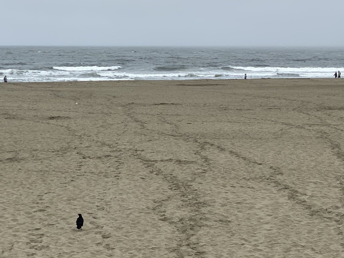 I found a wedding photo album at the high tide line at San Francisco's #OceanBeach before I paddled out to #surf.  It filled me with such sadness. But then the ocean washed pretty much everything away including me!pic.twitter.com/Ybffiv1zbK