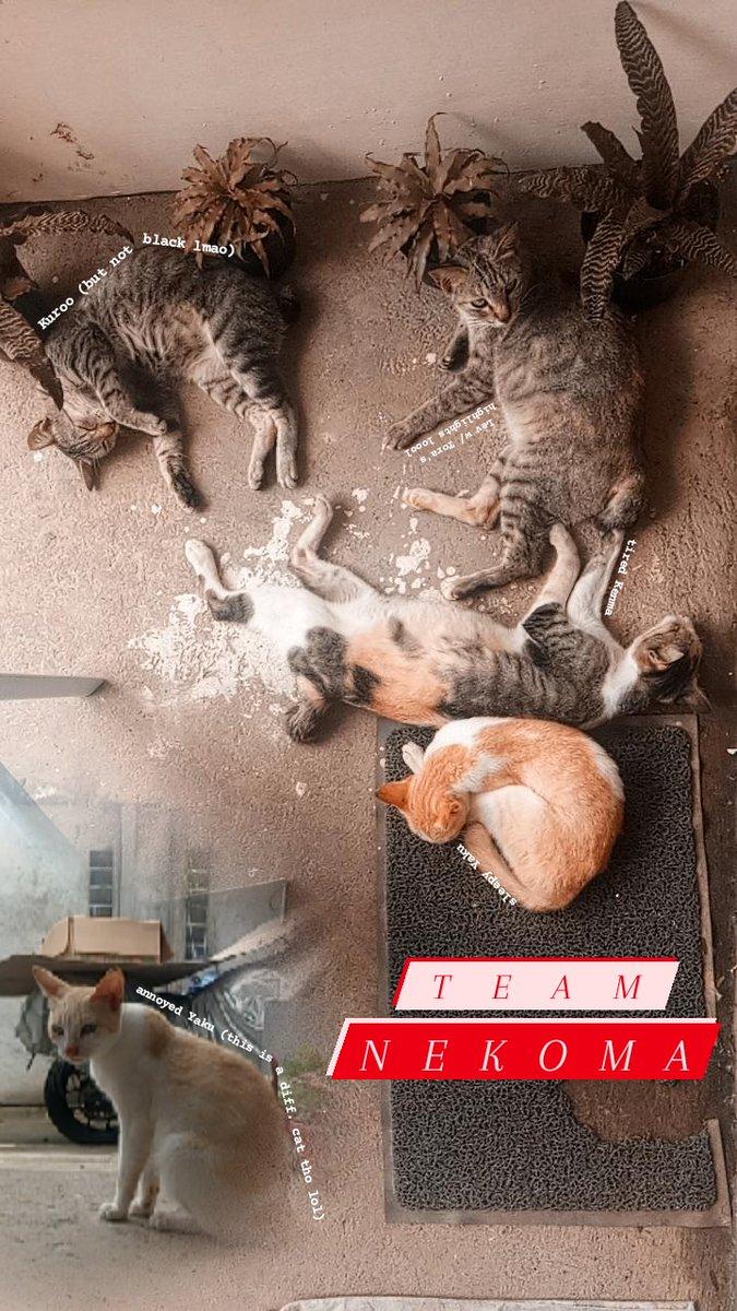 too much Haikyuu made me label oir cats as hq characters lmao #Nekoma #KenmaKozume #Yaku #Kuroo #LevHaiba #Haikyuu pic.twitter.com/6nNcEAtZmV