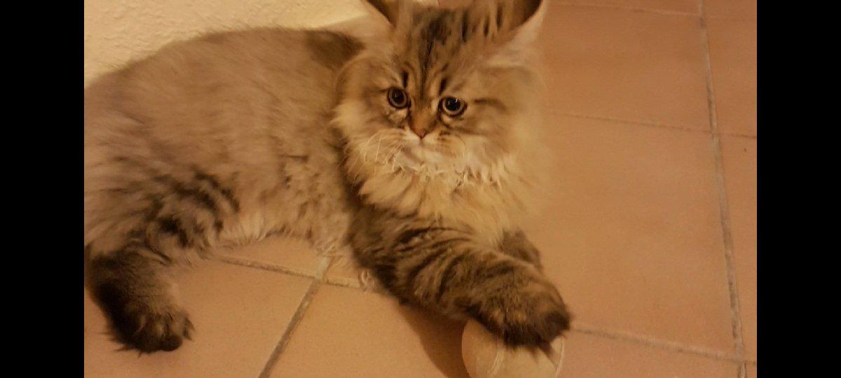 Julio #cat #cats #catsagram #petstagram #petsagram #ilovemycat #kitten #lovekittens #lovecats #catlover #instacat #pet #pets #instagramcats #kittycat #catlove #curiouscat #bestmeow #pet #meow #instapet #catlover #kittycat #mycat #cutecat #chatininstagram #happycat #frenchcatpic.twitter.com/BR7mXwsgVW