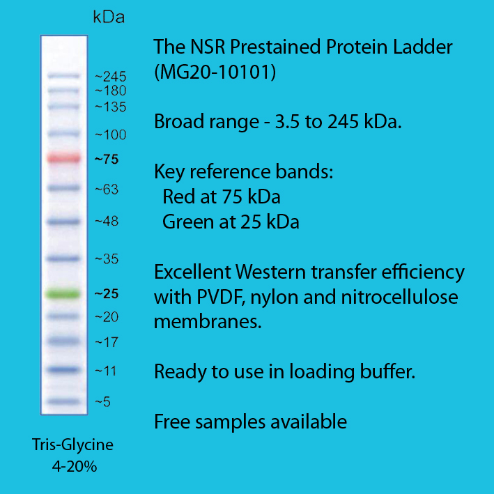 PRODUCT FOCUS: NSR Prestained Protein Ladders. Simply a great ladder at a great price. Request a free sample. #Proteinladders #Nsreagents #becausescienceishard https://newmarketscientific.com/products?utf8=%E2%9C%93&simpleq=NSR+Prestained+Protein+Ladder…pic.twitter.com/unrNEgcKrm
