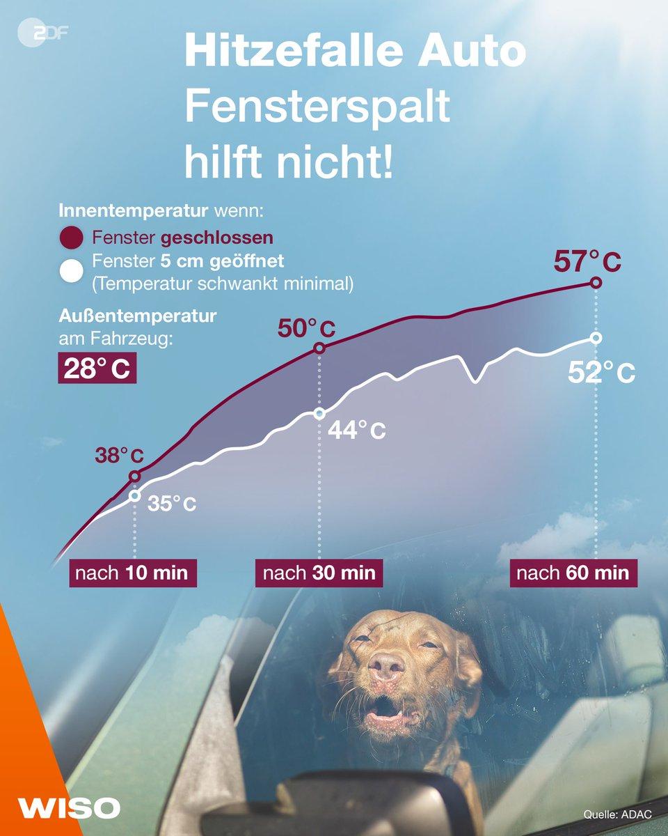 Kind 👶 oder Hund 🐶 beim Einkaufen einfach schnell im Auto lassen? Keine gute Idee! 🛑 #WISO zeigt, wie wenig ein offener Fensterspalt hilft, wenn es draußen heiß ist. https://t.co/vcP9EJDDtG