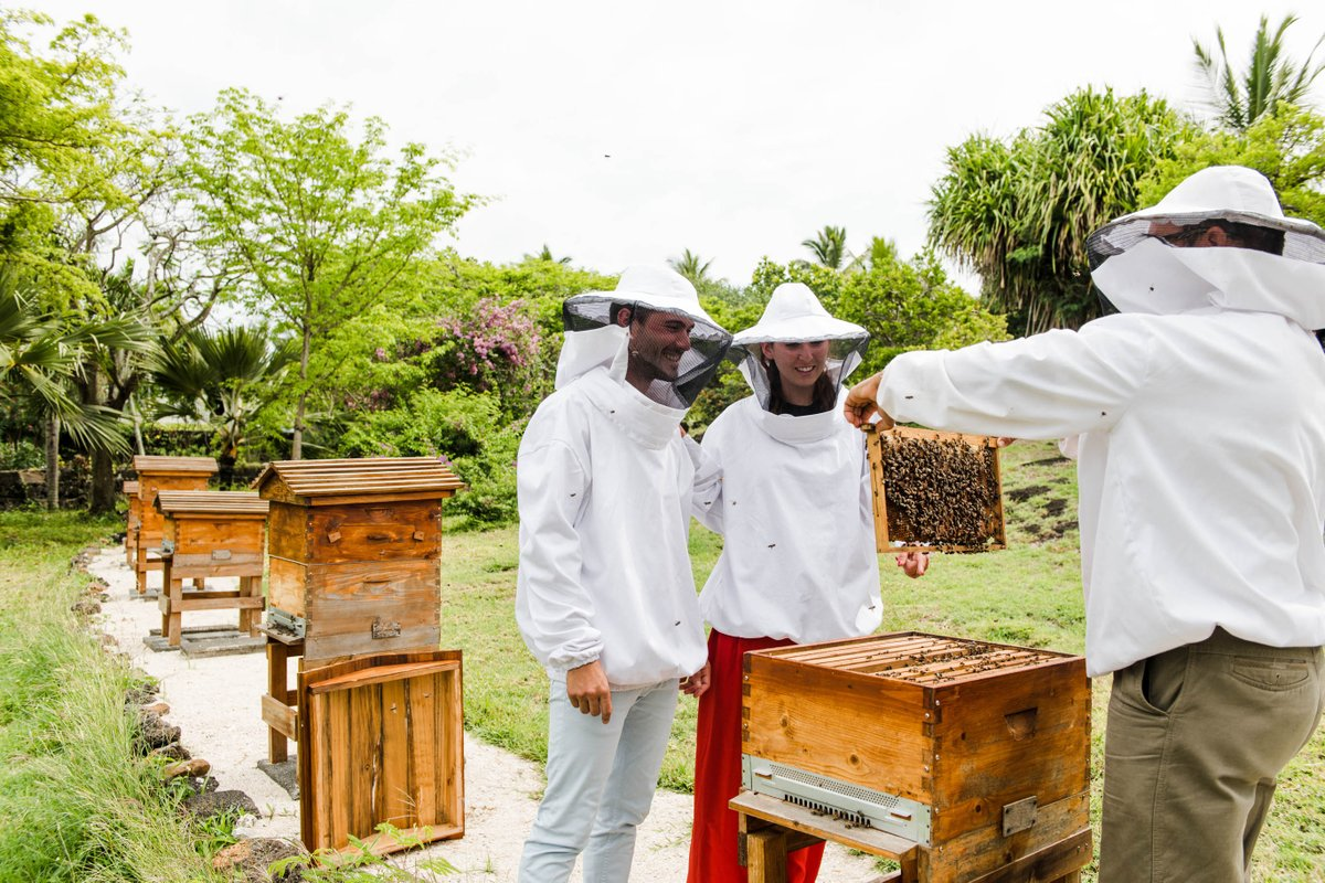 A huge thanks to our colleagues who maintain our on-property apiary, as well as the hardworking honeybees! Taste the fresh honey in delicious dishes throughout the resort  #MyShangriLa #FromTheTable #RootedInNature https://t.co/3kUgq3NwPz