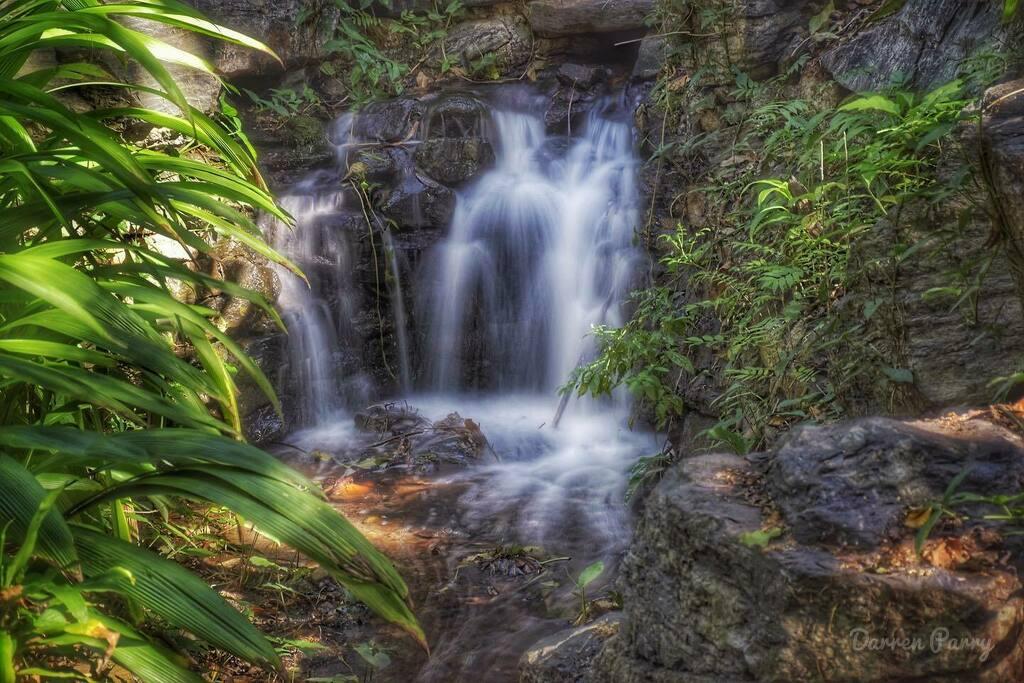 Mt Cootha Botanical Gardens. . . #brisbaneanyday #nikon #thisisqueensland #loveyouqueensland #river #waterfall #rainforest #nature #water #clouds #d5600 #nikonphotography #ig_australia #ig_captures_landscape #mountain #waterfalls #ozshotmag #nikon_dslr_u… https://instagr.am/p/CDaz7ocAU4R/pic.twitter.com/SOMv31wusr
