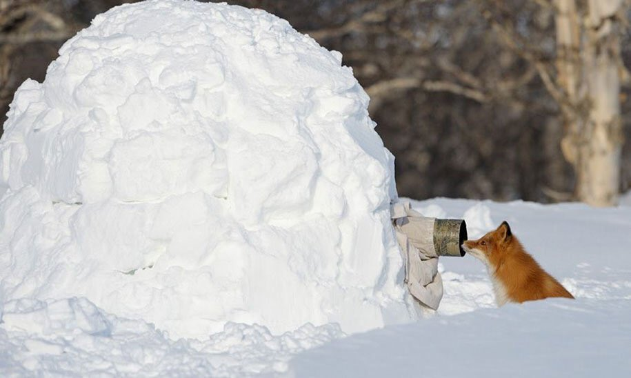 RT @yeskiri: 動物を撮影してたら予想外の距離にいたって写真個人的にめっちゃ好き https://t.co/ZnqUyWdfPV