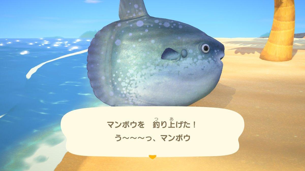 #どうぶつの森 #AnimalCrossing #ACNH #NintendoSwitch pic.twitter.com/UWYDLjogtD