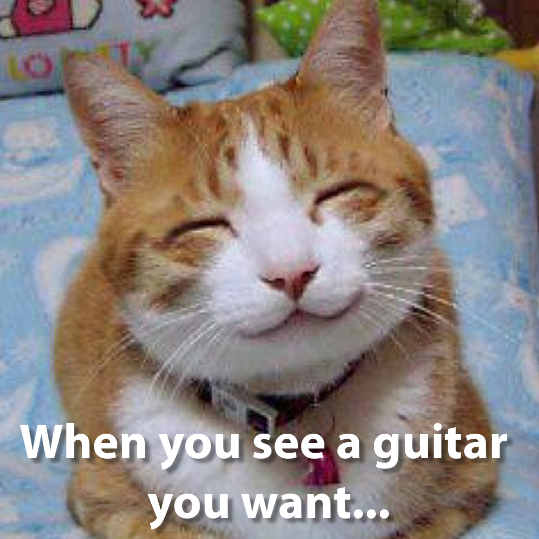 You know the feeling...   #fingerstyleguitar #memes #guitarstagram #cats #guitarsdaily #catsofinstagram  #guitarlife #guitarplayersunite #guitar #jamplay #guitartime #guitarsdaily #guitarist #guitarsarebetter #guitarlove #guitarlife #guitaristsofinstagram #instaguitarpic.twitter.com/htFrGrxI3F