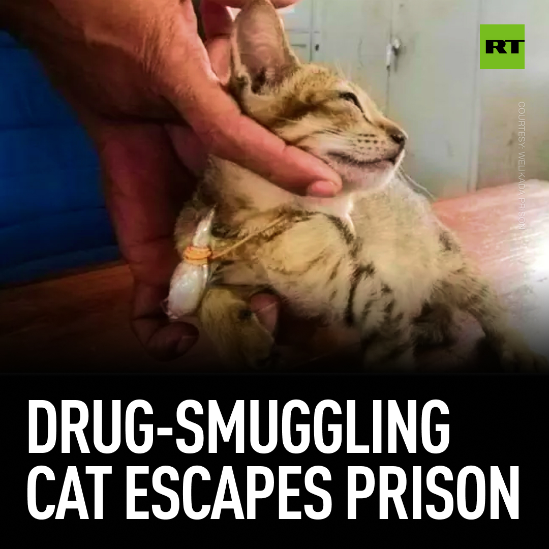 A cat was found wandering into the high-security Welikada Prison in Sri Lanka with nearly two grams of heroin in a bag tied to its collar. Despite being detained overnight, the felon absconded the next day, possibly after hearing inmates say that 'prison is no place for pussies.' pic.twitter.com/NFq32WU8Y5